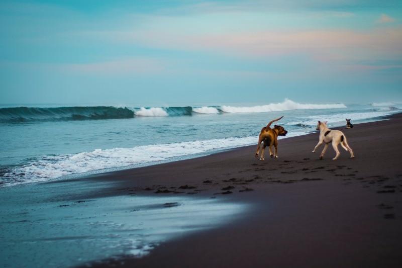 Black Sand beach of Monterrico, Guatemala