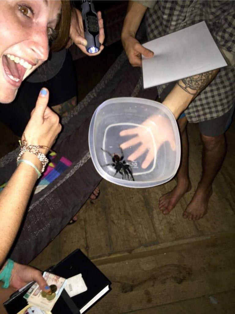 Tarantula in Semuc Champey