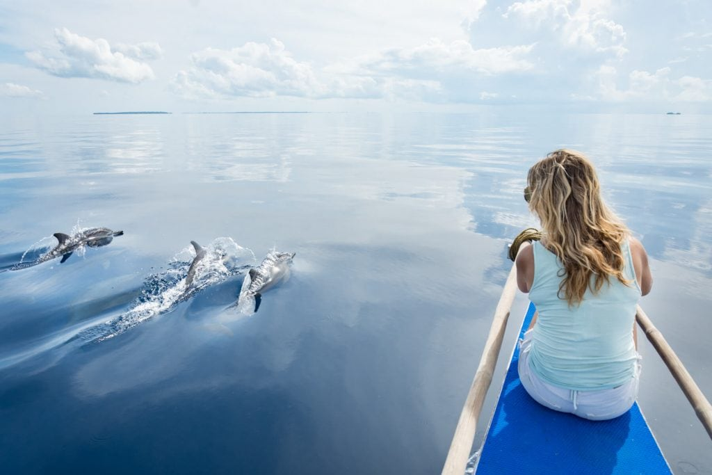 sailing alongside dolphins in Balabac islands