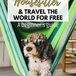 picture of a dog with text overlay how to become a housesitter and travel the world for free a beginners guide