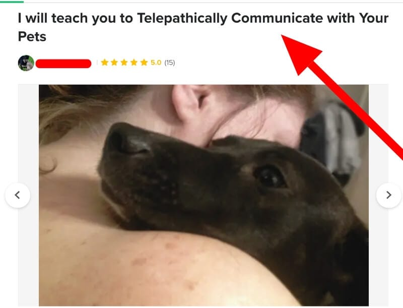 screenshot of fiverr job animal telepathy