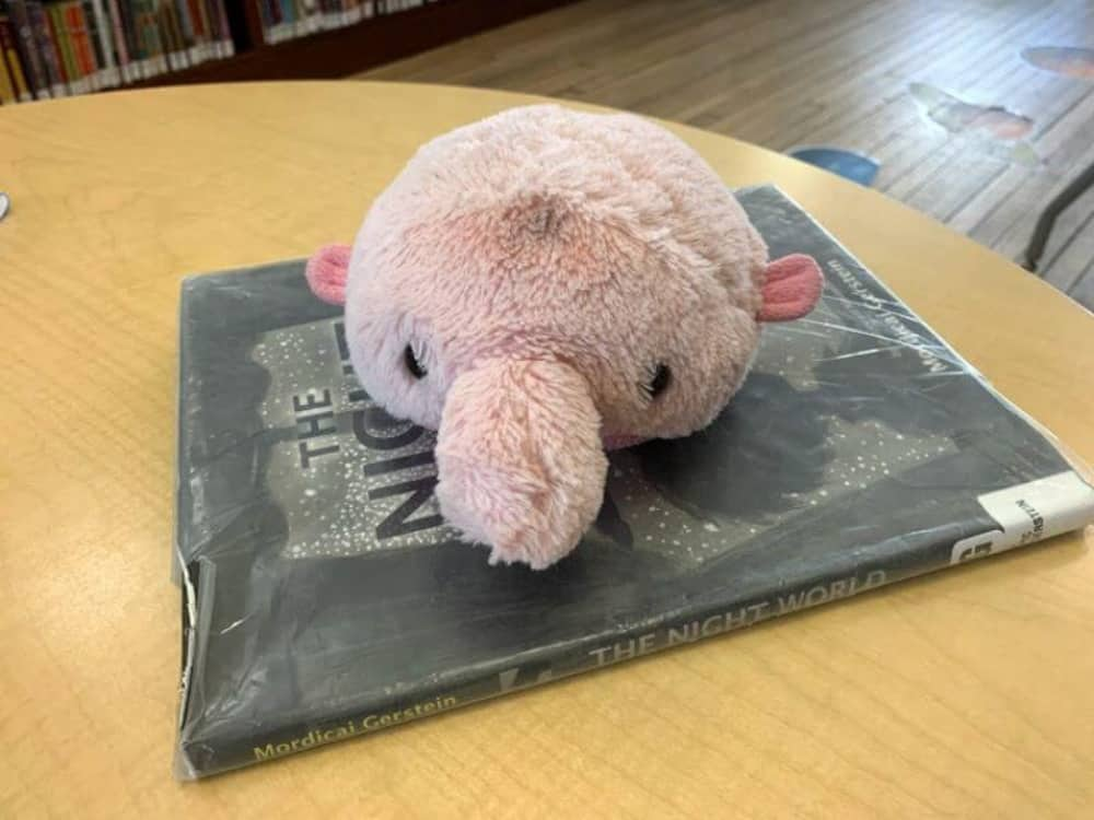 toy used when tutoring elementary students online