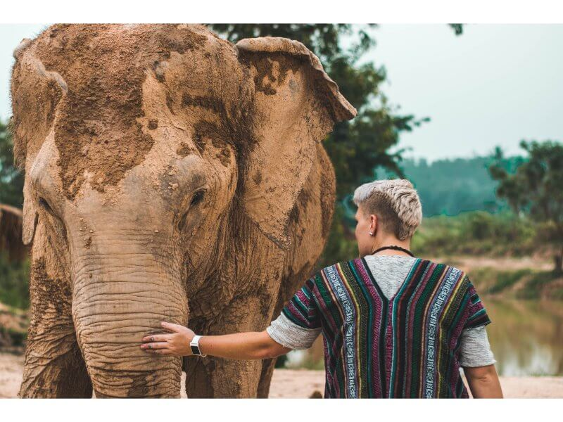 tourist caring for elephant